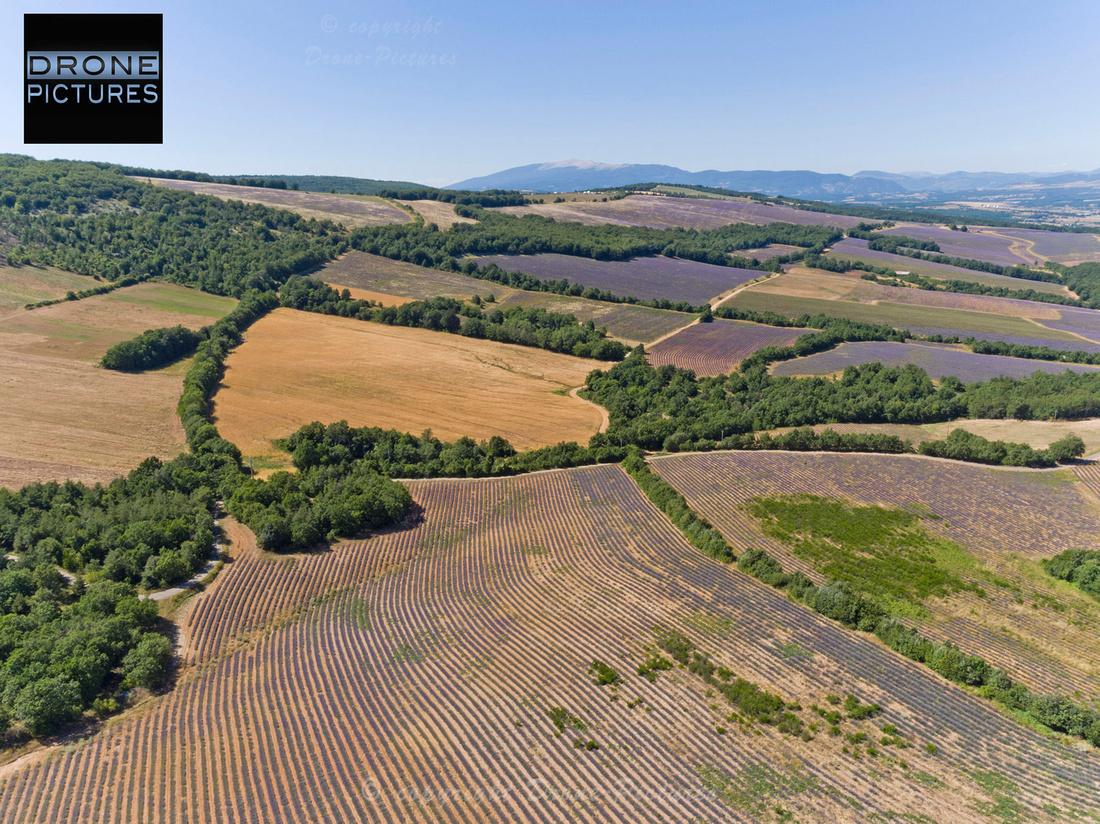 Lavandes vue aérienne par drone © Drone-Pictures