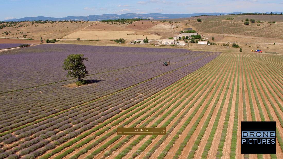 Récolte de la lavande, vue aérienne par drone © Drone-Pictures