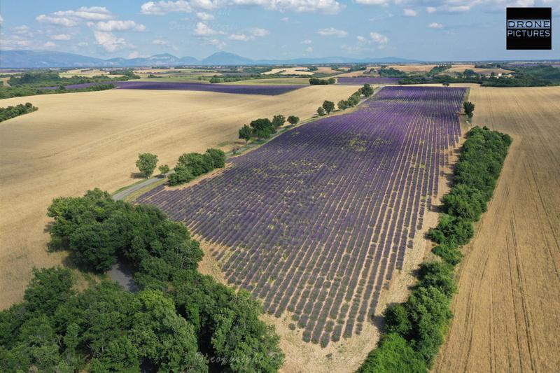 Vue aérienne des Champs de Lavandes en fleurl e 1er juillet vers Sault Vaucluse-DJI_0071 - Prise de vue par drone © Drone-Pictures