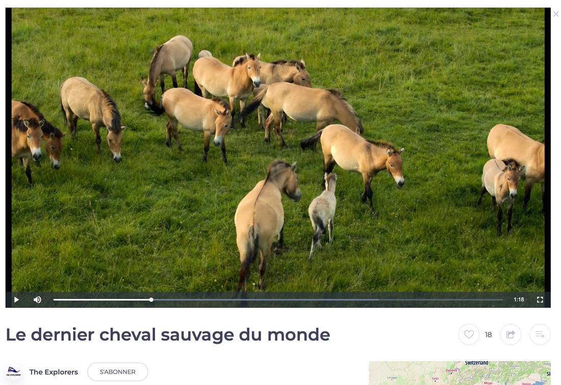 Clip Cheval de Przewalski  - Monts d'Azur - Thorenc Andon - Aples-Maritimes